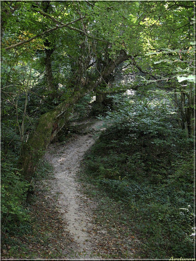 Le chemin qui monte et descend vers les vieux arbres 2007 for Bureau qui monte et descend